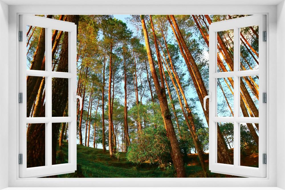 Las krl34-okno
