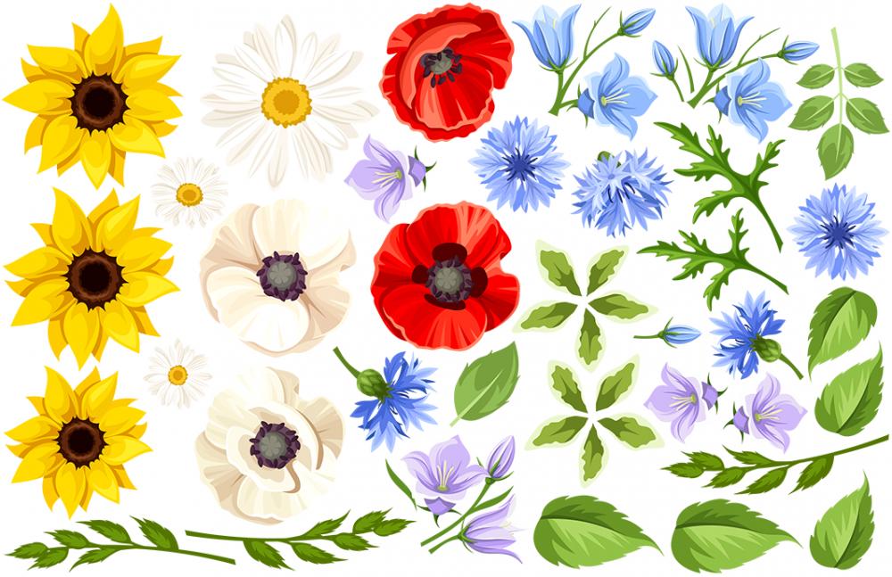 Naklejka na ścianę polne kwiaty nw1
